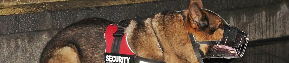 Perros de seguridad