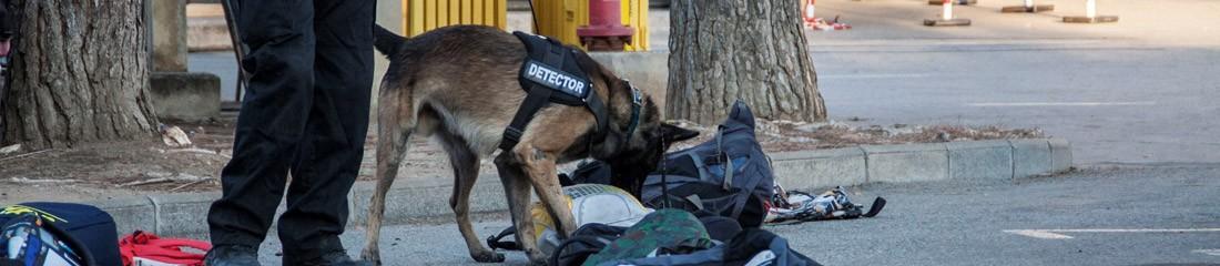 Perro detector de explosivos