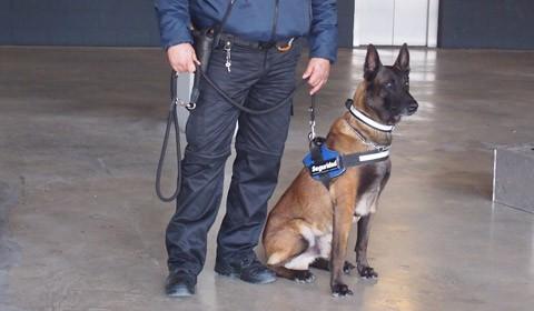 Gossos de seguretat i patrulla